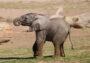 Boletos para el Zoológico, por vacunarse