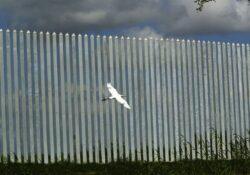 Gobernador Abbott anuncia plan para construir su propio muro para Texas